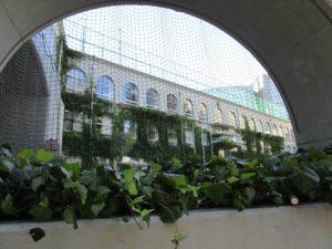 ツタに覆われた小学校